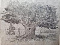 Ilustraciones alusivas, del libro «Un Pial al poema de los campos», de Enrique Pedro Schiaffino Errecalte, realizadas, por el talentoso y destacado, artista plástico chivilcoyano, Antonio Dontato Ginnetty (1916-1977).