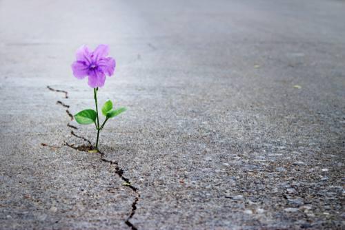 Reflexión lunfarda: Hace falta un mensaje de esperanza…